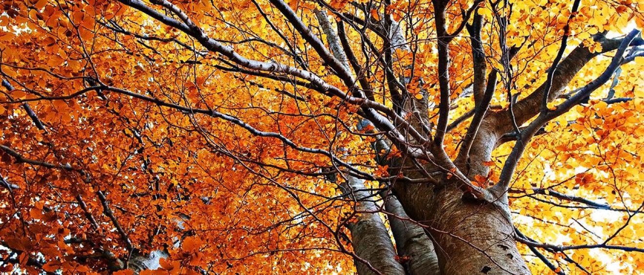 Herfstblaadjes, boomverzorging, blad valt van boom